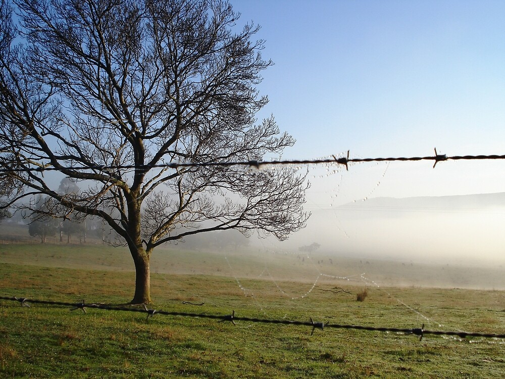 Morning Fog by Chris Kean