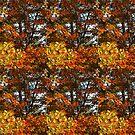 """Splendor Of The Fall"" by Gail Jones"