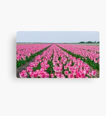 Field of White and Pink Tulips Canvas Print