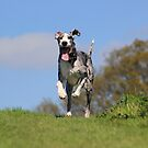 Running great dane by turniptowers