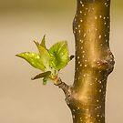 Apple Tree by rumimume
