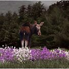 Moose in the Phlox by Wayne King