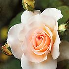 a perfect bloom by Jo Williams