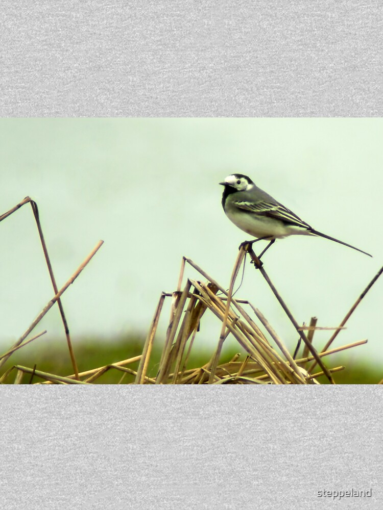 Pied Wagtail looking out... by steppeland