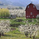 Blossoms For Miles by Randy Richards