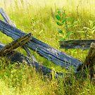 Fenceline by Jessica Dzupina