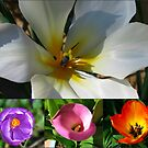 Flowering Bulbs Collage by MidnightMelody
