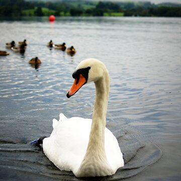 swan lake by srinivas