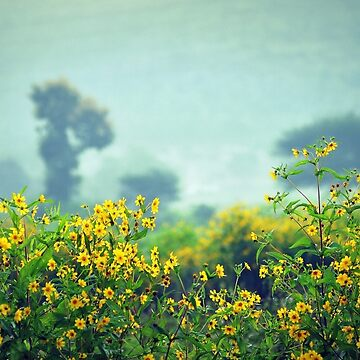 Mustard Fields by srinivas