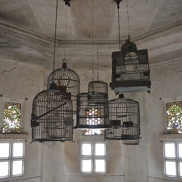 Cages by srinivas