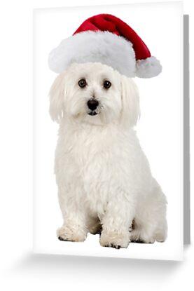 Bichon Frise Santa Claus Merry Christmas by CafePretzel