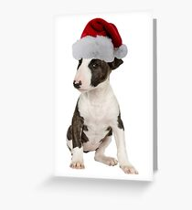 Bull Terrier Puppy Santa Claus Merry Christmas Greeting Card
