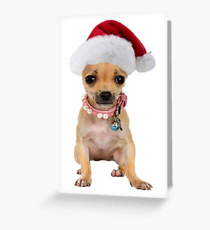 Chihuahua Puppy Santa Claus Merry Christmas Greeting Card