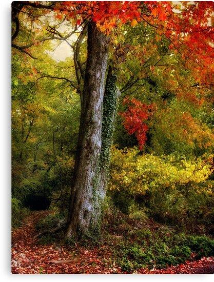 Autumn Ablaze by Jessica Jenney