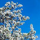 Spring Bloom by Radek Hofman