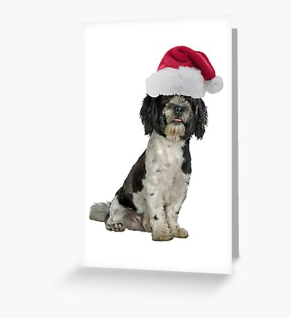 Havanese Dog Santa Claus Merry Christmas Greeting Card