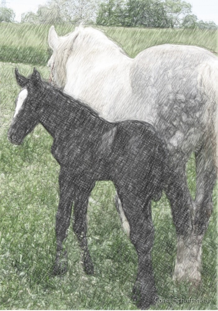 Percheron Colt And Mare In Pasture Digital Art by Conni Schaftenaar