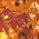 Autumn leaves by Angela King-Jones