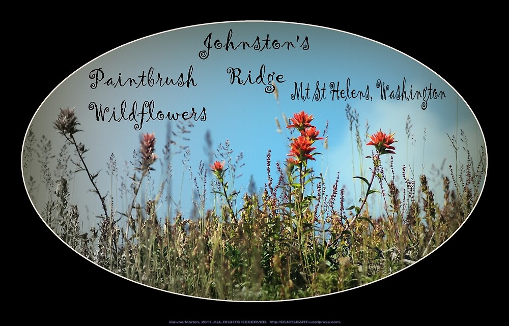 Paintbrush wildflowers, Johnston's Ridge oval by Dawna Morton