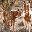 3-Last wild horses in Nevada by photo702