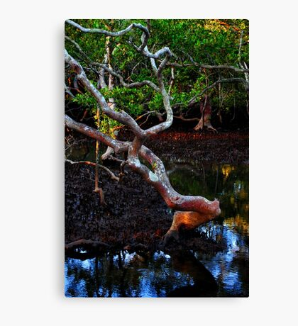 nudgee wood Canvas Print