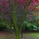 Magic Autumn leaves . October 2016 . Dr.Andrzej Goszcz. Canon 5D . by © Andrzej Goszcz,M.D. Ph.D