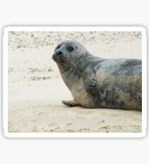 Seals Of Blakeney (1) Sticker