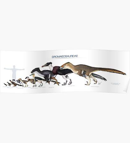 Dromaeosaurid Dinosaurs Size Poster