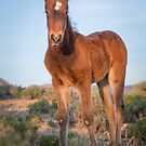 5-Last wild horses in Nevada by photo702