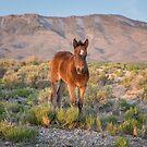 7-Last wild horses in Nevada by photo702