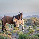 8 - Last Wild Horses in Nevada by photo702