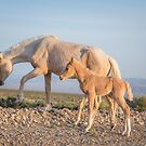 10 - Last Wild Horses in Nevada by photo702