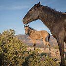 11 - Last Wild Horses in Nevada by photo702