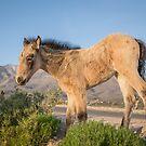 12 - Last Wild Horses in Nevada by photo702
