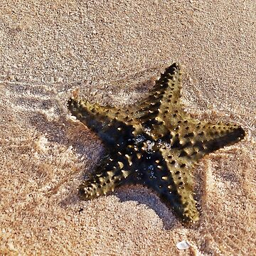 Starfish On The Beach by cherylorraine