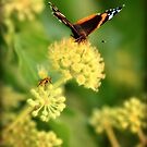 Last days of summer! by Terry O Keeffe