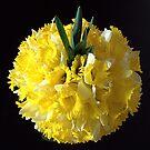 Daffodils ball by bubblehex08