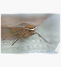 Bat Moth -Da Da Da Da - Da Da Da Da - Bat Moth Poster