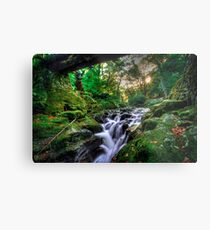 Under the Bridge @ Tollymore Forest Park, Co. Down Metal Print
