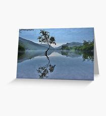 Lonely tree reflections Greeting Card