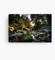 The River @ Tollymore Forest Park, Co. Down Canvas Print