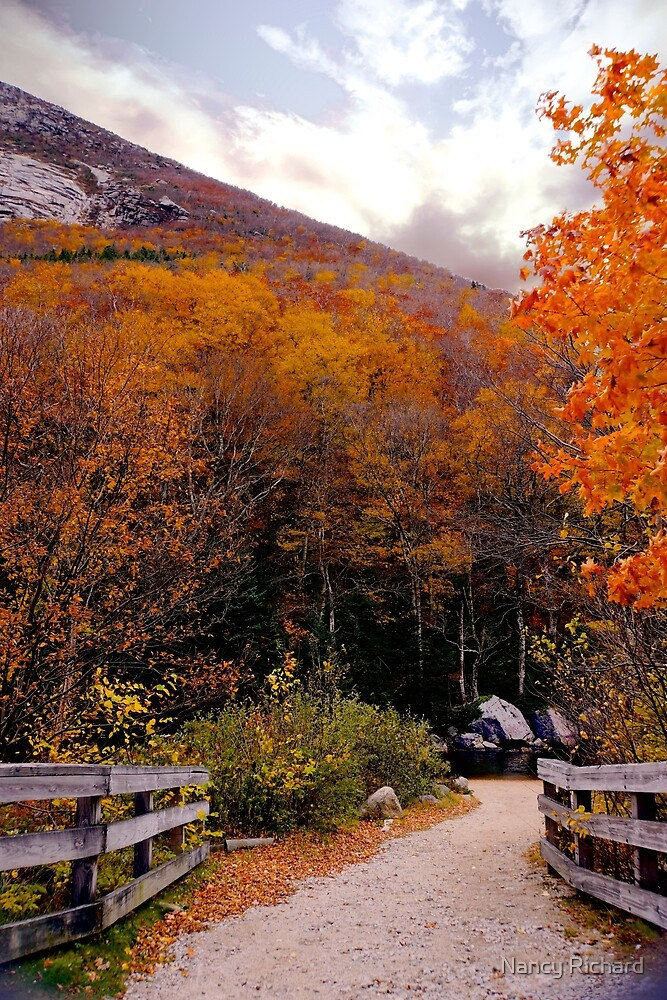 October Riot In New England by Nancy Richard