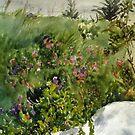 Wildflowers by ZiggyToes