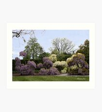 The Wisteria Garden at Longwood Art Print