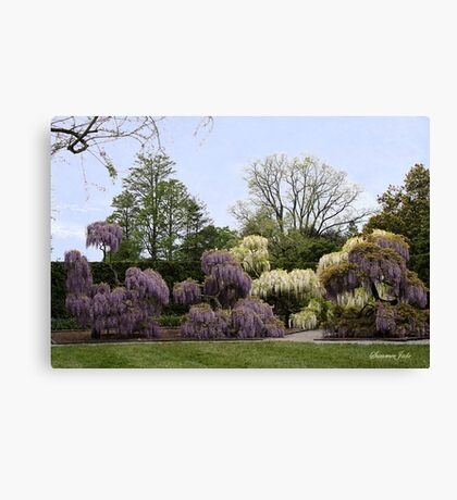 The Wisteria Garden at Longwood Canvas Print
