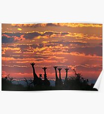 Giraffe - Sunset Sky - African Wildlife and Nature Background Poster