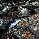Oak Leaves in a Stream Bed by Wayne King