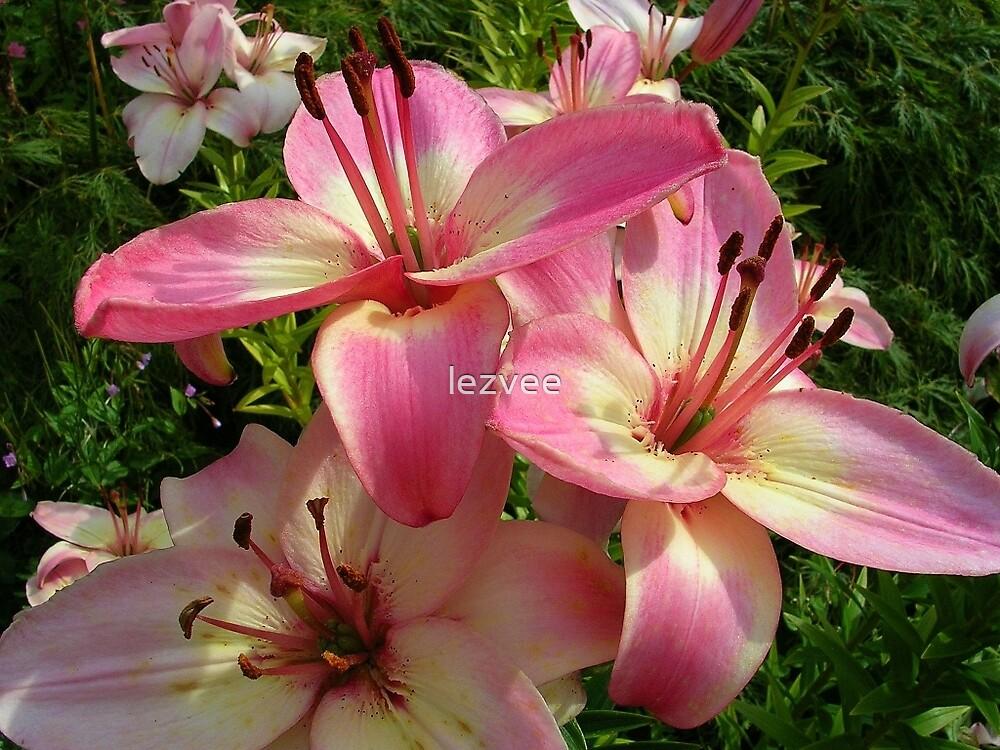 Pink Flowers by lezvee