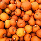 Pumpkins by Paul Finnegan