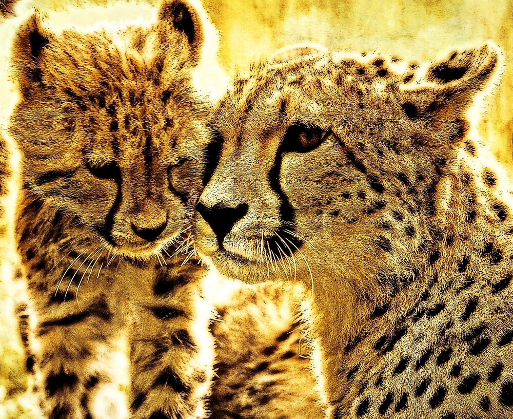 Cheetah affection by Alan Mattison